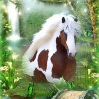 Illustration du profil de Sylvette Coccinelle